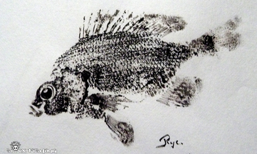 Gyotaku - Perche soleil collection 6