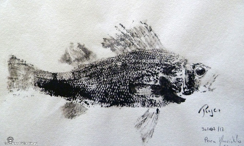 Gyotaku perche collection 10