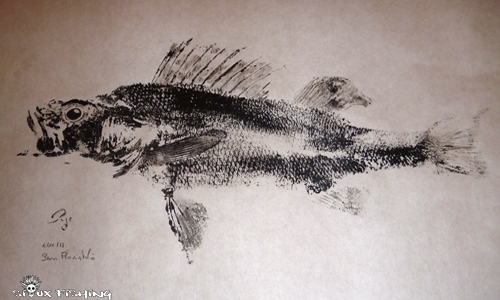 Gyotaku perche collection 11